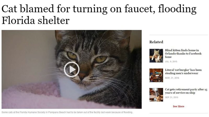 cats in the news