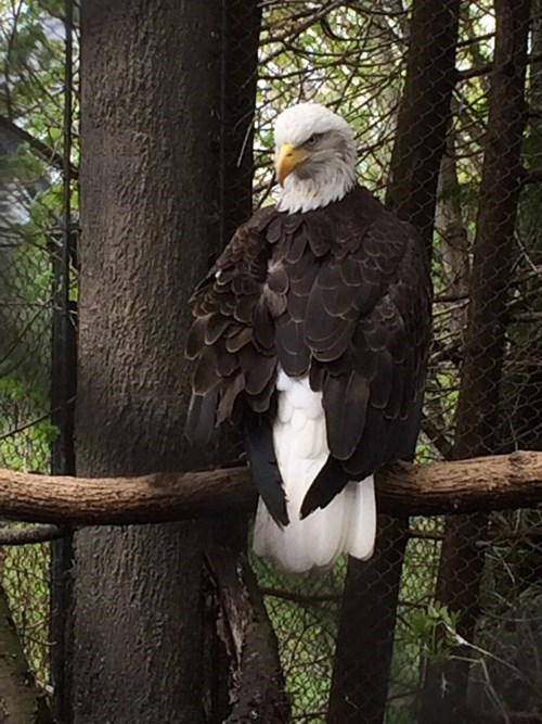eagles dat head turn - 8324682496
