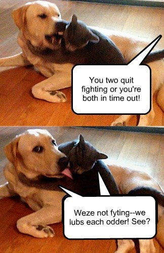 dogs fight Cats - 8324827904