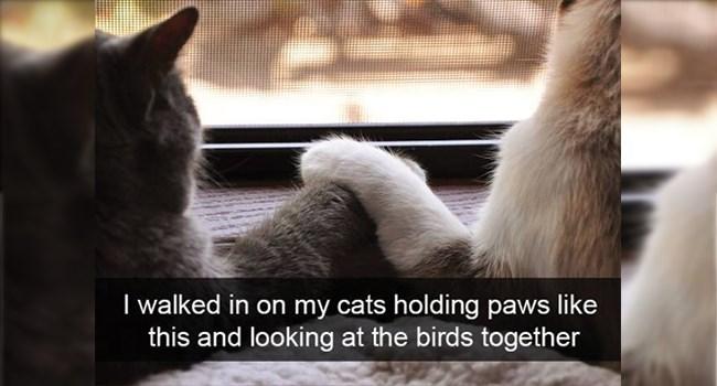 funny animal snapchat