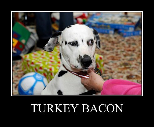 bacon dalmation dogs