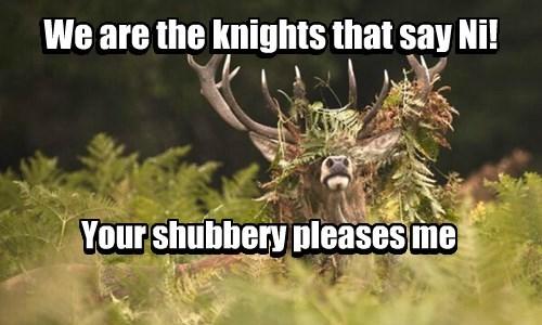 antlers deer monty python ni - 8325011968