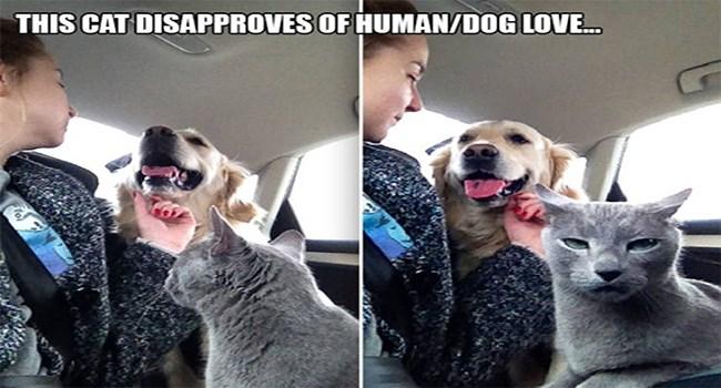 expressive cats