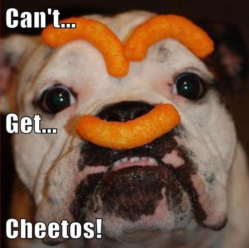 Cheezburger Image 8325167104
