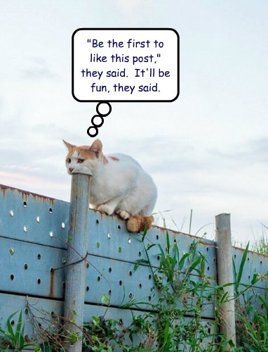 the internets facebook Cats - 8325336064