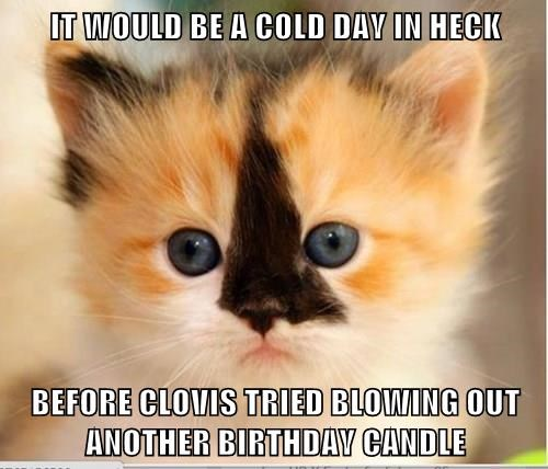 orange kitten with black strip on its nose and blue eyes looking resolute happy birthday meme