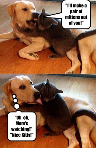 dogs fight Cats - 8325588480
