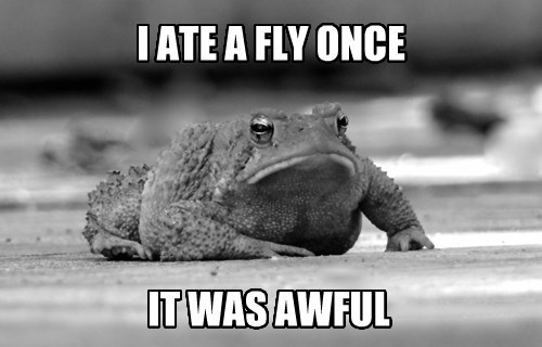flies,toads,Grumpy Cat