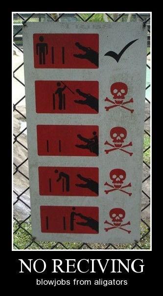alligators funny sign wtf - 8325827840