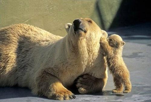 kids parenting polar bear