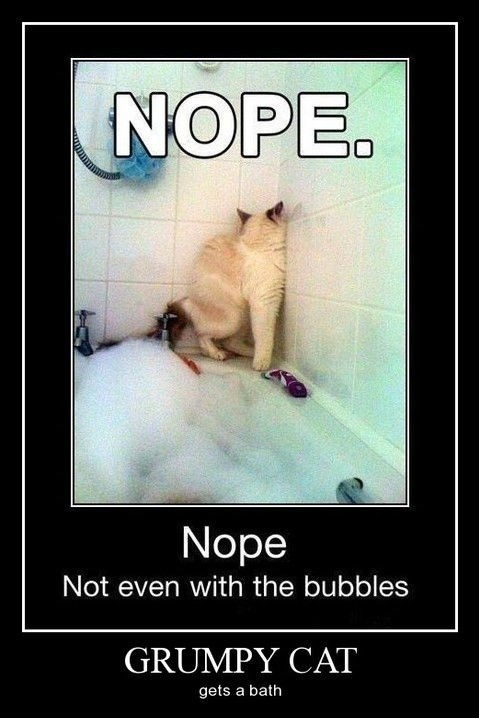 Cats bathtub funny nope - 8325924096