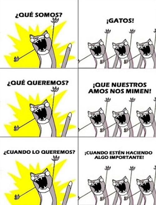 gatos bromas Memes animales - 8326092544