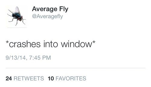 fly,twitter,average fly