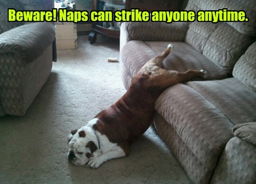 dogs nap caption funny - 8326205952