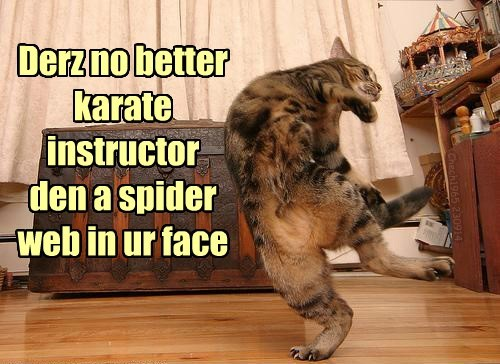 Cats,scared,spider