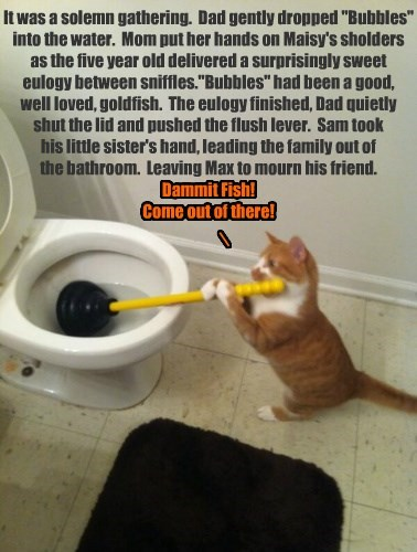 Cats,goldfish,plumbing