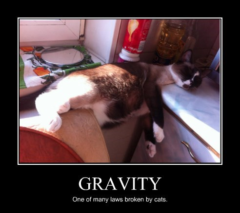 Cats Gravity nap sleeping - 8327004416