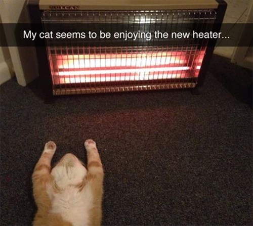 Cats,heater,tabby