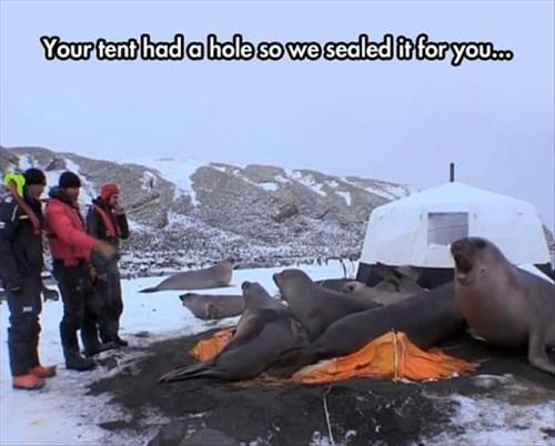antarctica,puns,seals