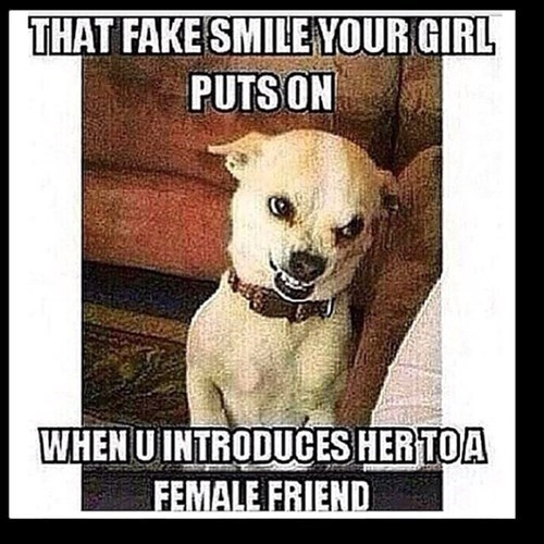 fake dogs funny smile - 8327101440