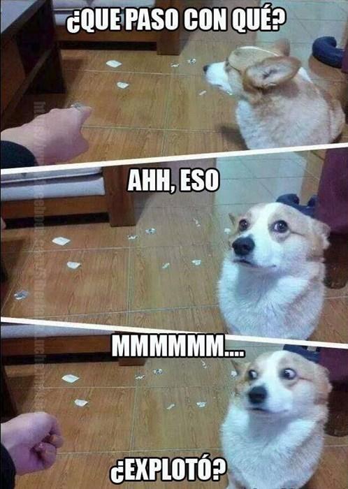 Memes animales perros bromas - 8327169792