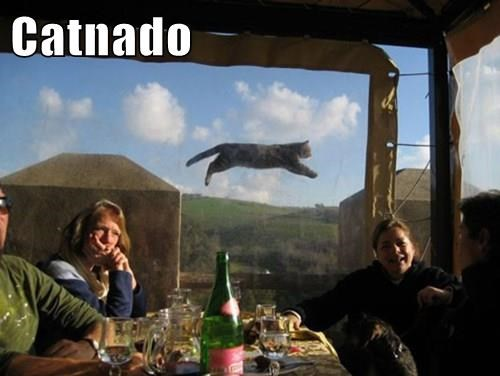 sharknado Cats flying - 8327281920
