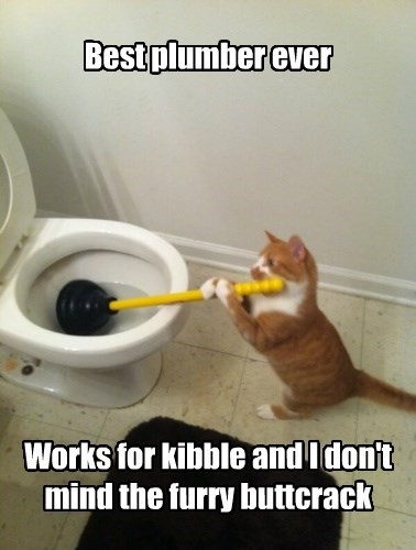 crack tabby plumber Cats - 8327488768