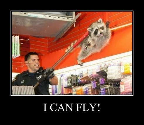 funny flying raccoon wtf - 8328321536