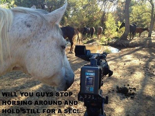 camera horse i have no idea what im doing - 8328345344
