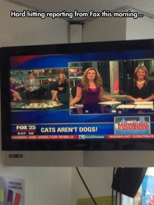 dogs news fox news Cats - 8328366336