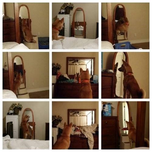 dogs mirror vanity - 8328374528