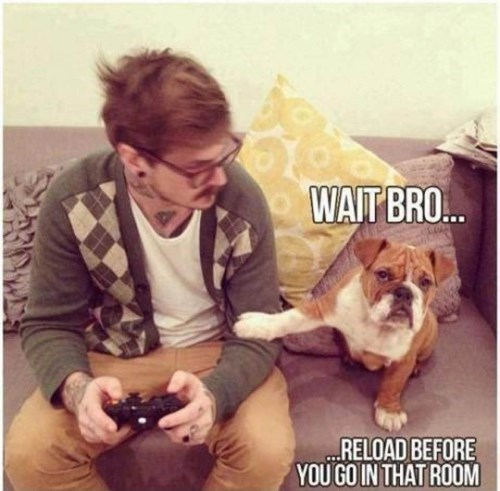 dogs,video games,puppy