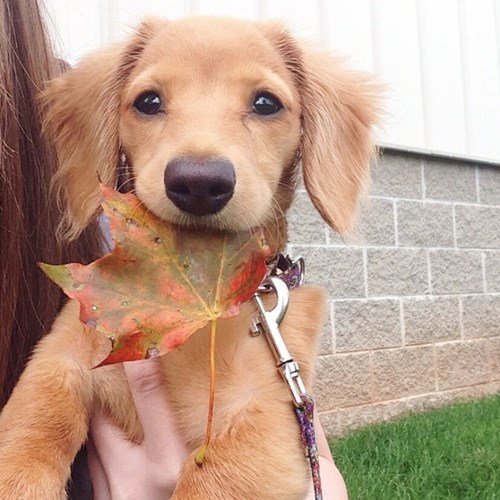 cute-10479 dogs-15244 fall-1279 puppy-3050 - 8328399872