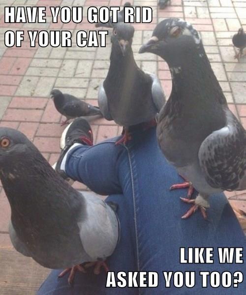 Cats mafia pigeons - 8328697856