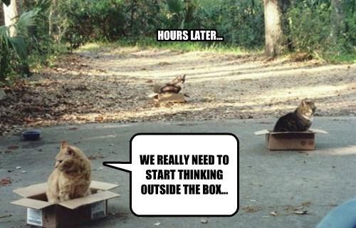 Cats boxes if i fits i sits - 8328773888
