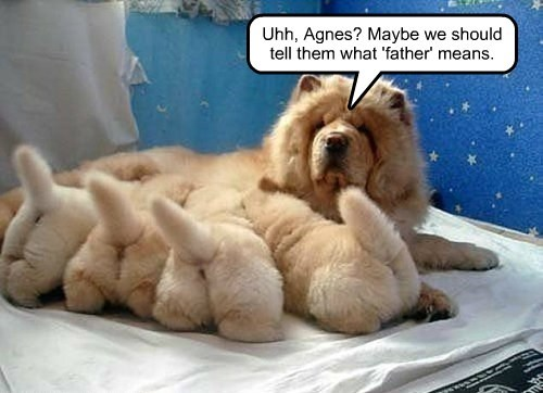 dogs puppies means caption Father - 8328808448