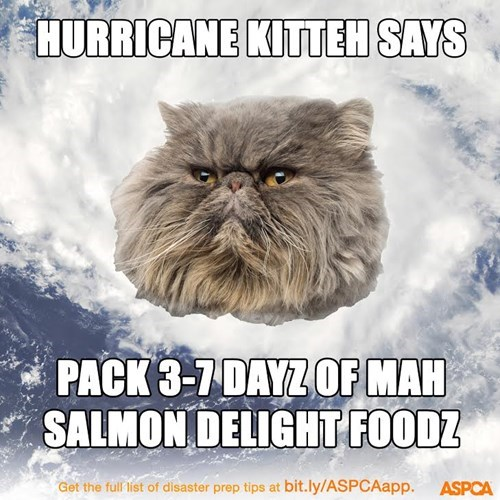 Cats disaster preparedness month - 8329017088
