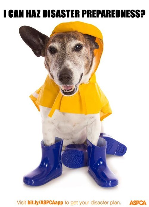 dogs disaster preparedness month - 8329022208