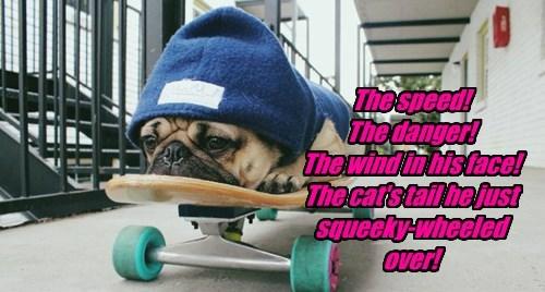 dogs skateboard pugs - 8329052928