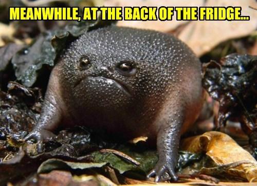 mystery meat frogs - 8329608960