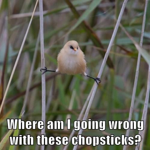do you even lift bird chopsticks - 8329849856
