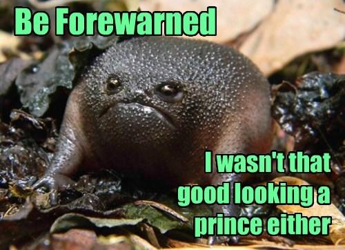 grumpy frog prince - 8329912320