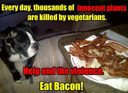 dogs plants innocent eat caption bacon - 8329992192