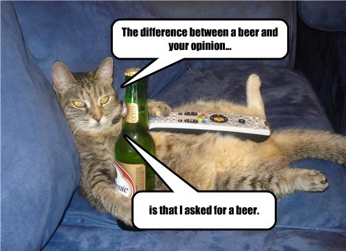 beer,Cats,lazy,opinion