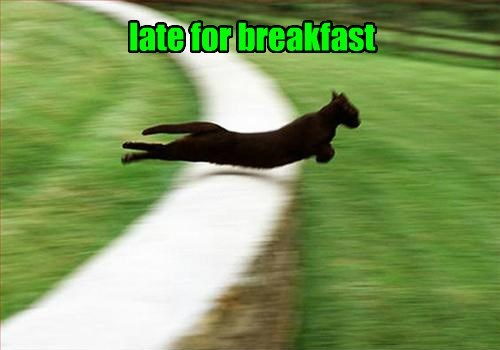Cats,breakfast,late