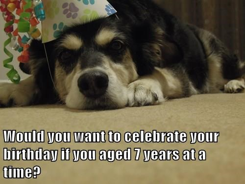 dogs seven birthday years caption aged - 8330165504