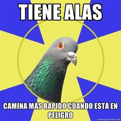 Memes animales bromas - 8330187776