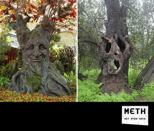 funny meth tree after 12 - 8330269440