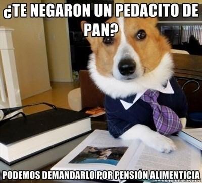 Memes animales perros bromas - 8330341376