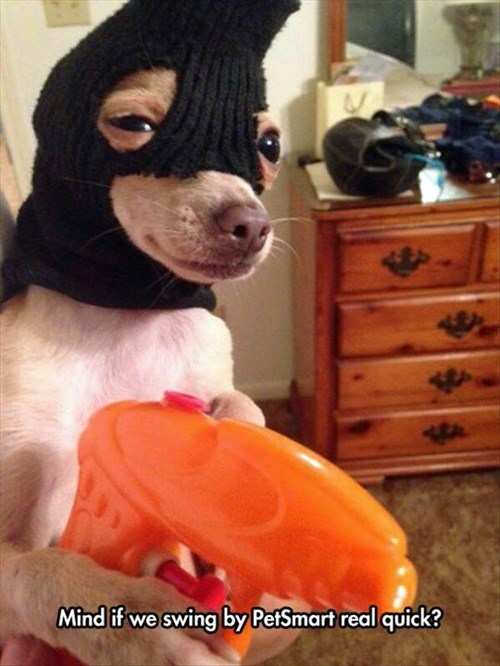 dogs mask chihuahua robbery - 8330437376